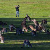 Tierische Zuschauer am Golfplatz