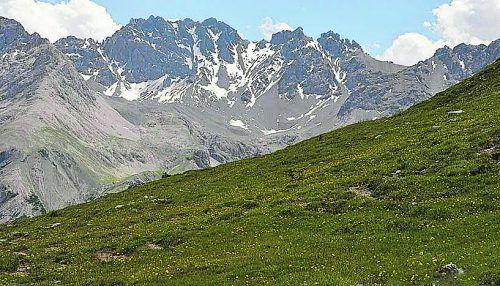 Für alpine Pflanzenarten stellt der Klimawandel eine besondere Herausforderung dar. Foto: APA