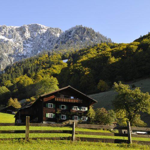 In einem neuen Führer wird die Schönheit der Klostertaler Bergwälder in den Fokus gerückt. Foto: pRIVAT
