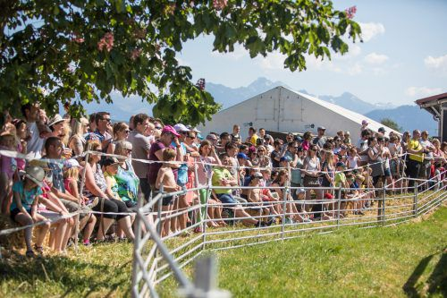 Rüssel-Runden-Rennen als große Besucherattraktion: Ab geht's im Schweinsgalopp.  Foto: VN/SAMS