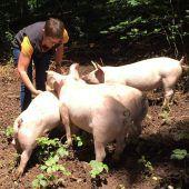 Glückliche Schweinchen tun uns gut
