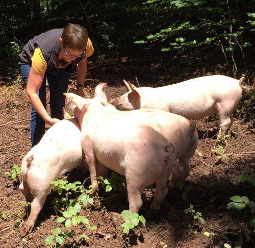 Tierschutzpreisträgerin Sieglinde Breuss aus Übersaxen mit ihren glücklichen und ganz besonders zutraulichen Freilaufschweinen.  Foto: VD