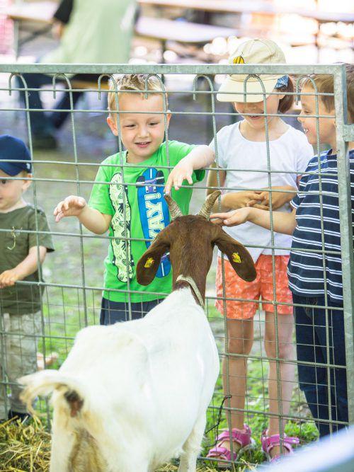 Ziegen, Meerschweinchen oder Pferde: Auf Luisl's Farm kamen Tierfreunde auf ihre Kosten. sams