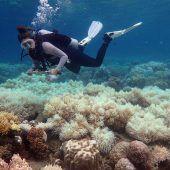 Korallenbleiche nimmt verheerende Ausmaße an