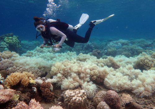 Das Great Barrier Reef beherbergt eine einzigartige Tier- und Pflanzenwelt. AP
