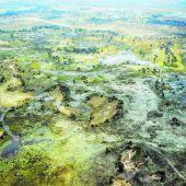 Im Galopp durchs Okavango Delta