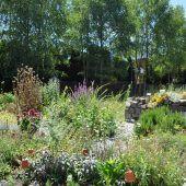 Johanniskraut im Gartentreff