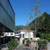 Neue Bäume für Gastgarten bei Kulturbühne