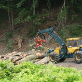Holzschlägerung am Bahngleis in Gisingen