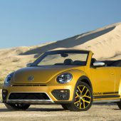 Dünen-Käfer: Umgeben von Sandstorm Yellow