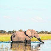 Über 130.000 Elefanten