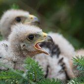 Kleiner Vogel, großes Geschrei