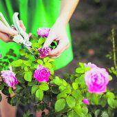Sommer mit Rosenduft und Blütenpracht