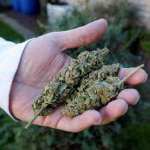 Polizei stellte eine Tonne Cannabis sicher