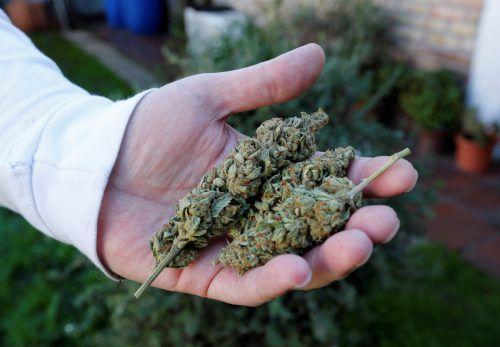 Cannabis: An erster Stelle der sichergestellten Suchtmittel.  RTS