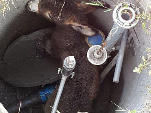 Das Tier konnte unverletzt befreit werden. Foto: Polizei
