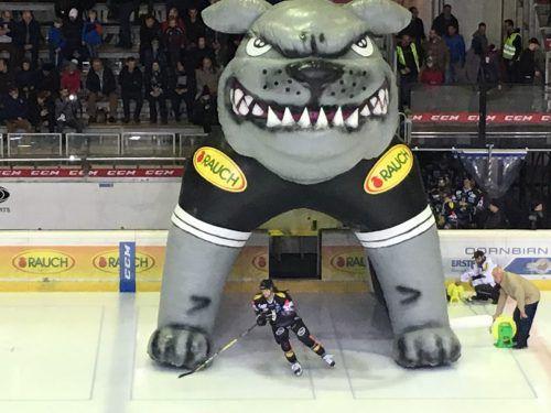 Die Bulldogs müssen auch der Stadt Dornbirn manchmal die Zähne zeigen. Foto: ECD