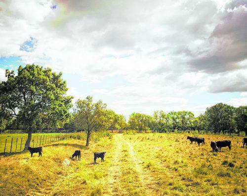 Die Camargue ist berühmt für die schwarzen Stiere.