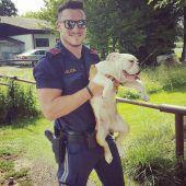 Polizei beschlagnahmt Hundewelpen