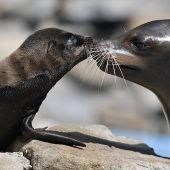 Ein Küsschen von Mama