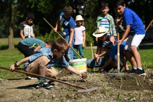 Schüler der Volksschule Rheindorf beim Pflanzen am Gutshof Heidensand. Foto: Gemeinde