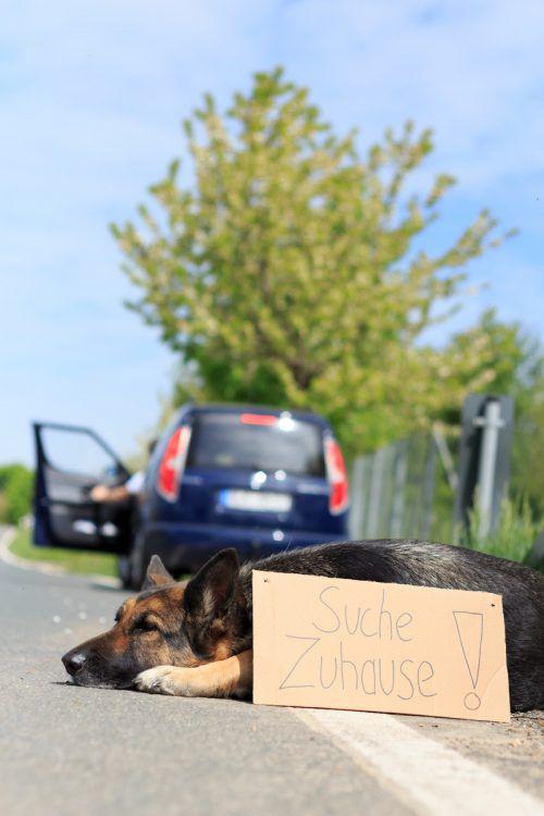 So mancher Tierhalter nutzt seine Urlaubsreise, um sein Haustier zu entsorgen.