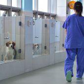 In Seoul werden Hunde auf Bestellung geklont
