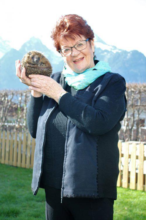 Anneliese Dalpez kümmert sich seit Jahrzehnten liebevoll um ihre Igel. VN/JS