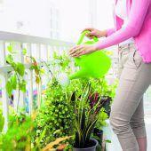 Blumentopf gut befestigen