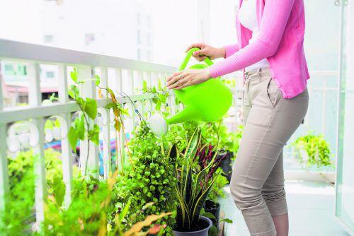 Beim Gießen der Pflanzen ist Sorgfalt geboten. Foto: Shutterstock
