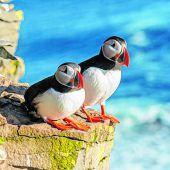 Bunte Vögel als Fotomotiv