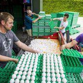 Auch Österreich testet Eier auf giftiges Fipronil
