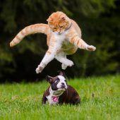 Katzen, Hunde und wir Menschen