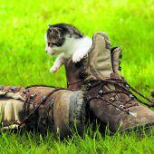 Am heutigen Weltkatzentag feiern Katzenfreunde ihre Stubentiger