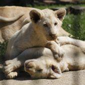 Spielstunde im Zoo