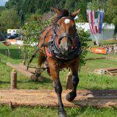 Beeindruckende Leistungen mit nur einer Pferdestärke