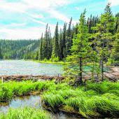 Großes Abenteuer im wilden Alaska