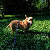 Hundeerfahrung erwünscht
