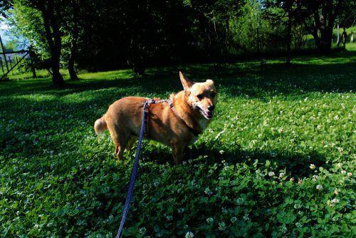 Igor (l.) und Lilly vertreten heute alle im Tierschuzheim lebenden Hunde, die auf der Suche nach einem richtigten Zuhause sind.