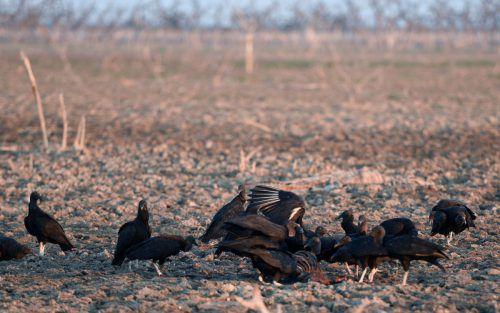 Im Schnitt wird im Chaco alle zwei bis drei Minuten eine Fläche in der Größe eines Fußballfeldes gerodet. Foto: AFP