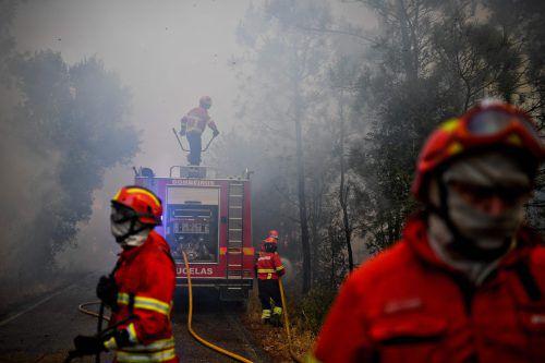 Seit Wochen wird Portugal von Waldbränden heimgesucht. Allein im Juni kamen 64 Menschen in den Flammen ums Leben.Foto: AFP