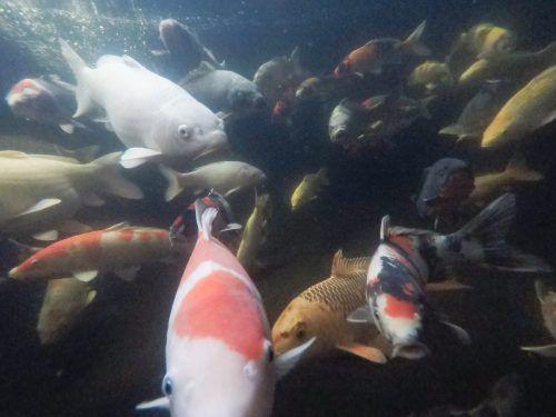 So sieht es unter Wasser aus, wenn die bunten Zierfische auf Tauchstation gehen.