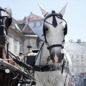 Hitzefrei für Fiaker-Pferde