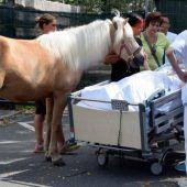Pferd besuchte sterbende Frau im Krankenhaus