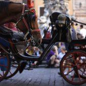 Pferdekutscher in Rom wegen Tierquälerei angeklagt