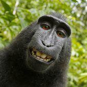 Streit um Affen-Selfie beigelegt