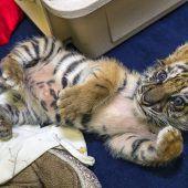 Tigerchen gerettet