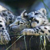 Kuschelige Geschwister