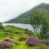 Blühende Heide und Wasser