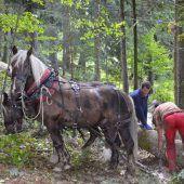 Waldverjüngung und Aufforstung im Fokus